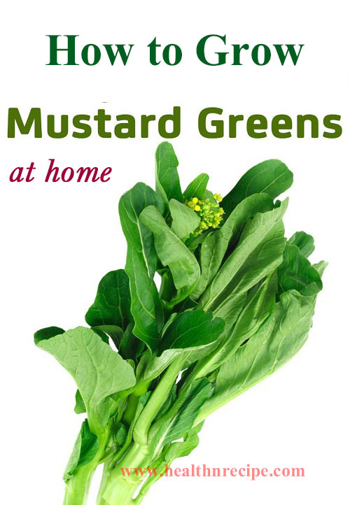 Grow Mustard Greens At Home