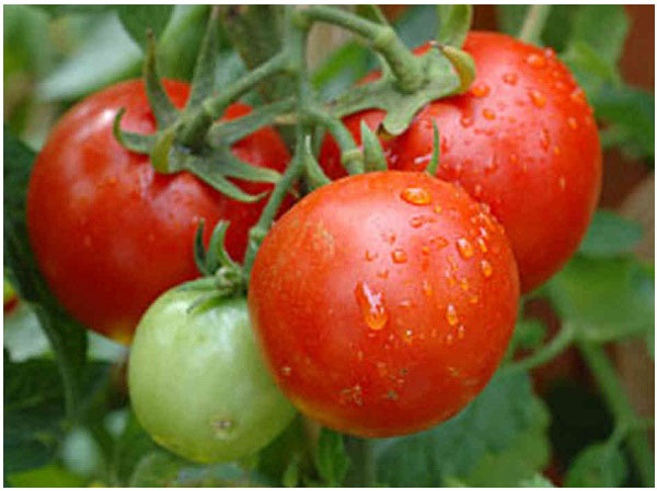 Tomatoes Benefits for Health