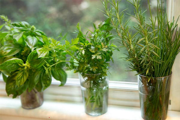 Fresh Summer Herbs
