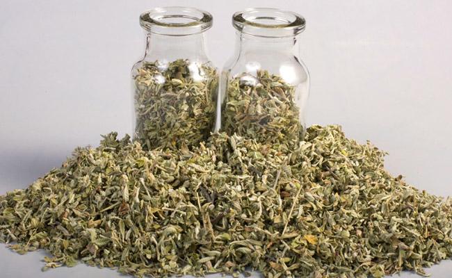 sacred herbs
