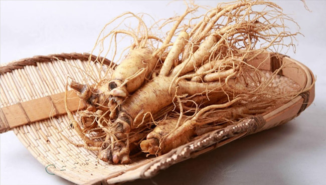 ginseng for memory